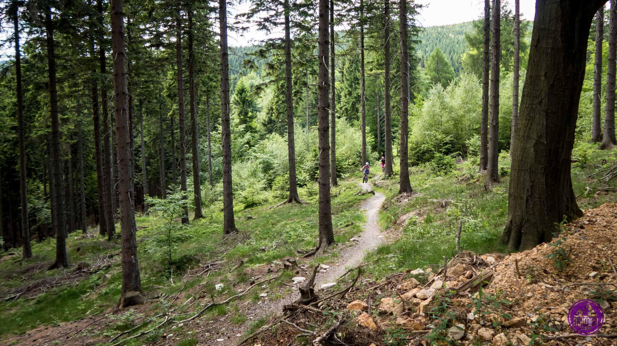 Singiel w lesie.